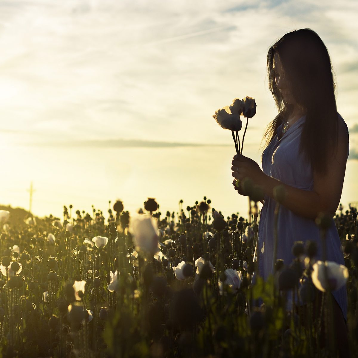 meditation fleurs